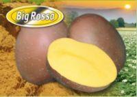 BIG ROSSA A 5kg 35/55mm