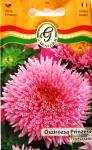 Őszirózsa Prinzess rózsaszín