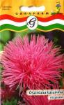 Őszirózsa tűszirmú rózsaszín