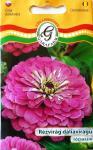 Rézvirág dáliavirágú rózsaszín