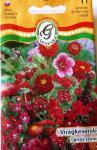 Virágkeverék piros színű