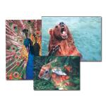 GEMBIRD Mouse pad PVC picture
