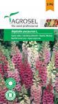 Gyűszűvirág színkeverék, Digitalis purpurea L. - 0,75 g