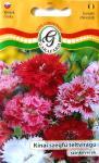 Szegfű Kínai teltvirágú színkeverék