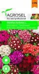 Törökszegfű színkeverék, Dianthus barbatus L. - 1 g
