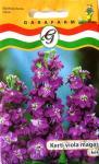 Viola kerti magas