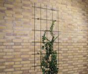 Fali növény futtató rács téglalap 57x145 cm