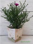 Bádog kaspó és váza