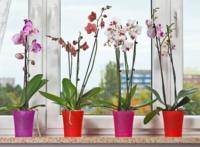 Műanyag orchidea kaspó