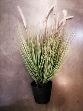 Pampafű műnövény 72 cm magas