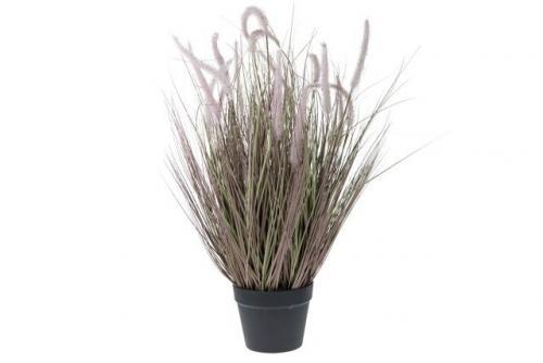 Tollborzfű műnövény 70 cm magas
